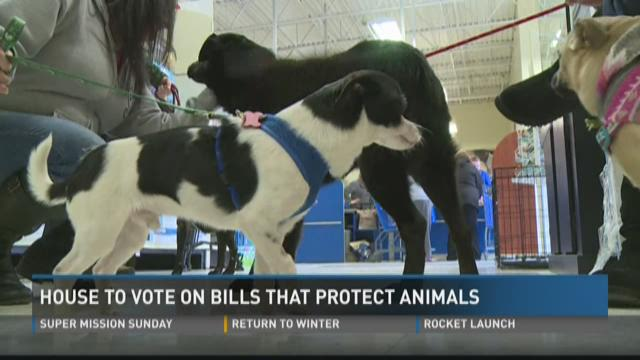Michigan House to vote on bills that protect animals