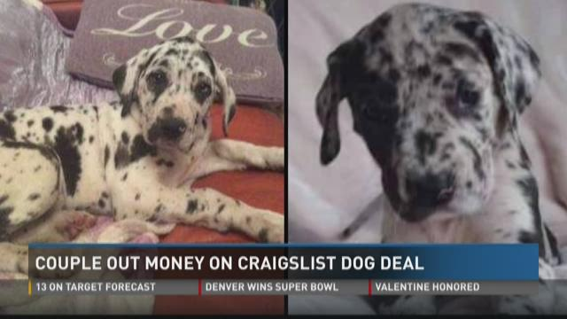 Couple out money on Craigslist dog deal