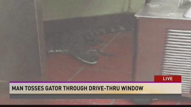 FBHW: Gator through a window prank