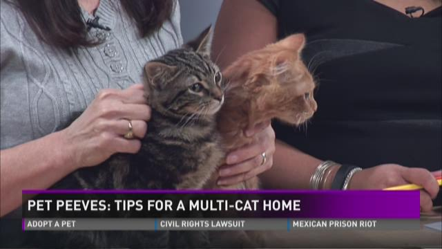 Pet Peeves: Tips for a muli-cat home
