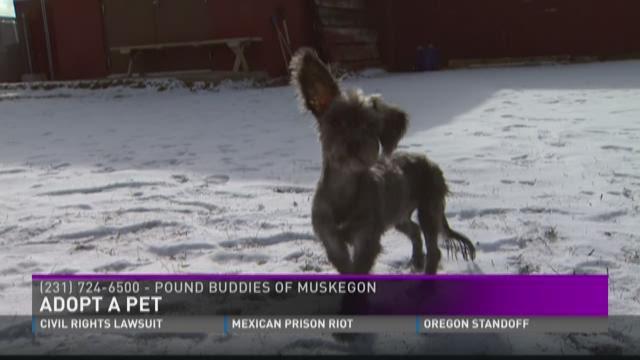 Adopt-A-Pet: Puck