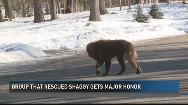 Group that rescued Shaggy gets major honor