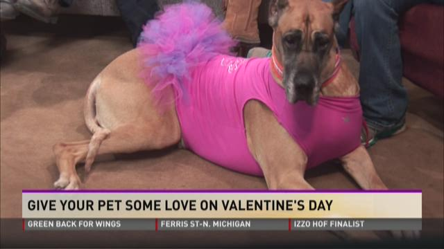 Dogwood Barkery holds Valentine's Day event for pets