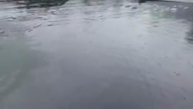 Whale surprises Alaskan fishing crew