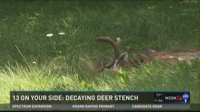 City removes rotting deer carcass from Leonard St. property