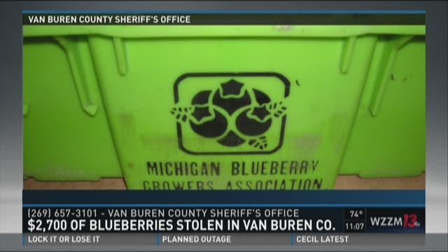 $2,700 of blueberries stolen in Van Buren County