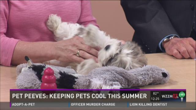 Pet Peeves: Keeping pets cool this summer