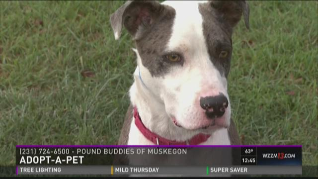 Adopt-A-Pet: Quaid