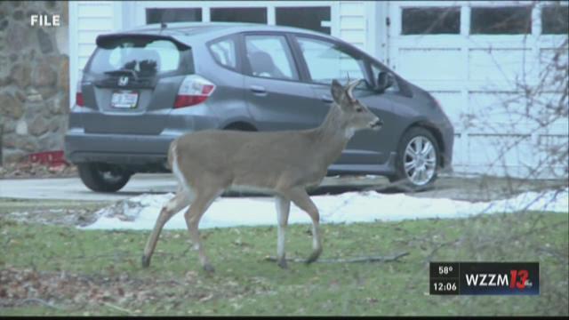 DNR investigating 18 deer killed in Norton Shores