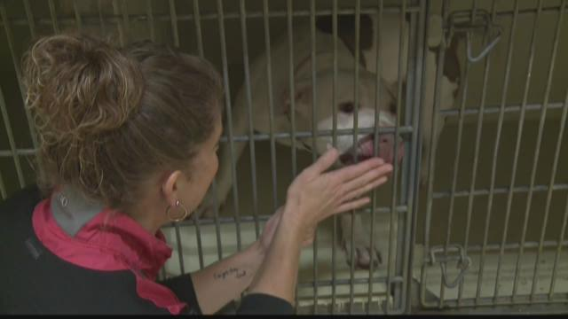 Bill would ban local laws targeting specific dog breeds